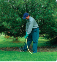Shrub Root Fertilization
